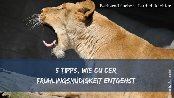 Gähnender Löwe und 5 Tipps gegen die Frühlingsmüdigkeit